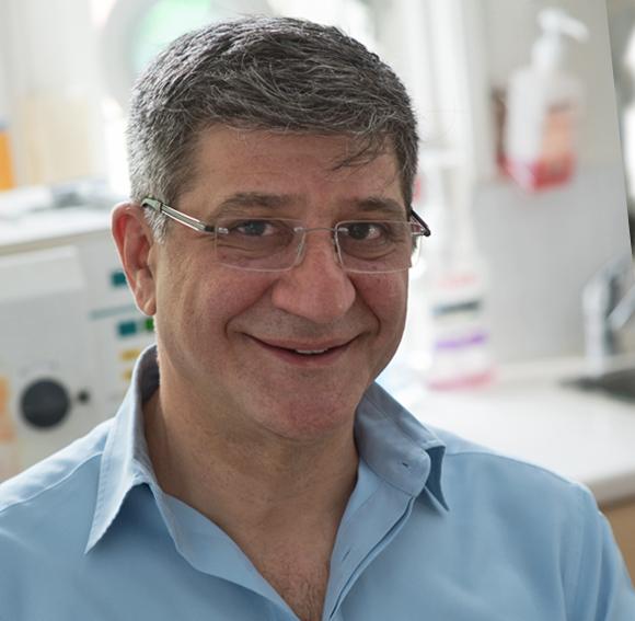 Kyri Falekkos BDS (Rand)